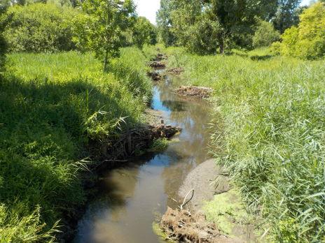 Lutte contre la prolifération de la végétation aquatique - Terminée