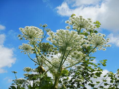 Programme pluriannuel de gestion des plantes exotiques envahissantes sur le bassin de la Serre amont