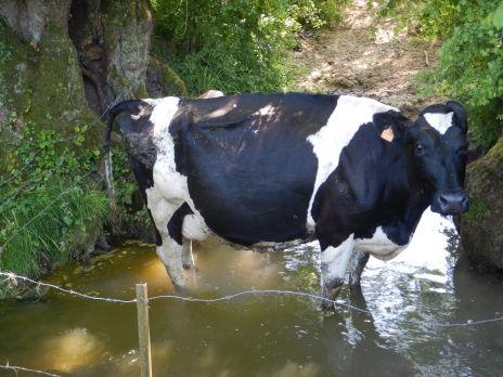 Mise en défens du cours d'eau de la Serre et de ses affluents - Lot 2 - PPRE Serre amont